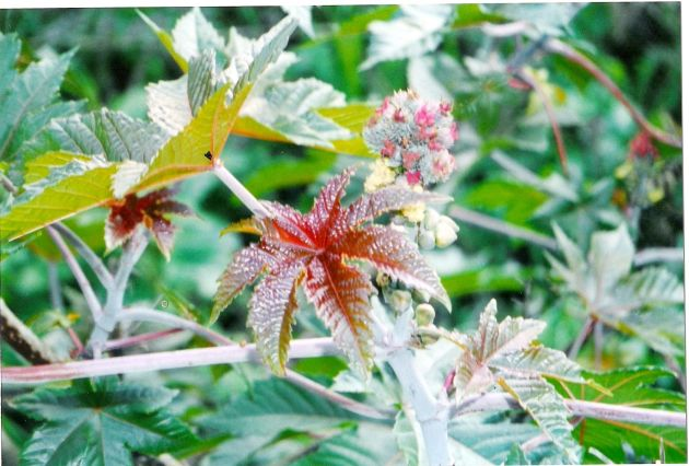 Plants 2*